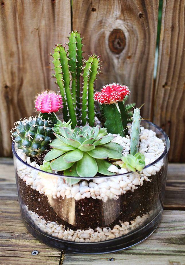 Filename Diy Small Living Plant Terrarium Decor 2016 Vinuschin 1508 21 1 Jpg