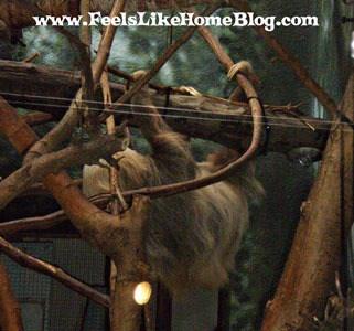 Sloth at the zoo