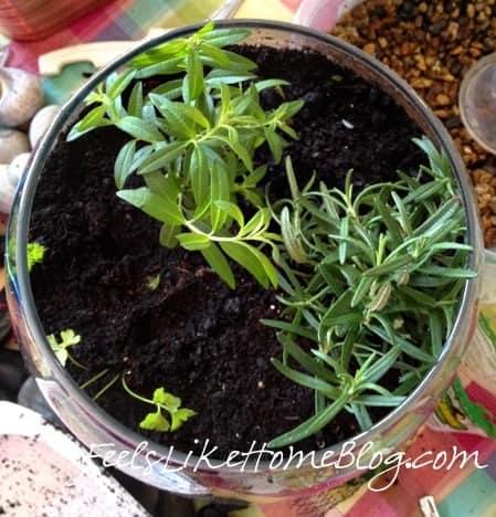 how to make a terrarium - plant the herbs