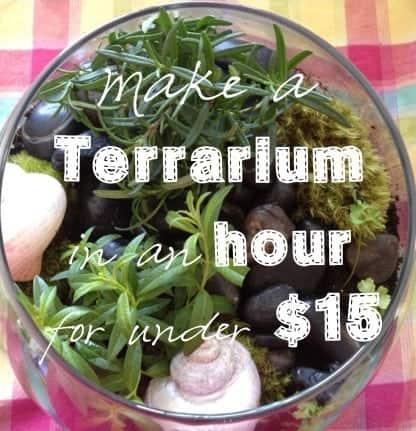 A homemade terrarium