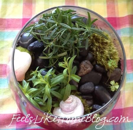 terrarium with seasheels