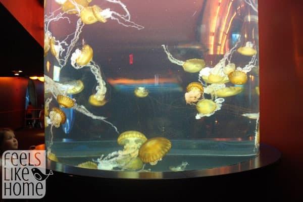 Adventure Aquarium review - jellyfish