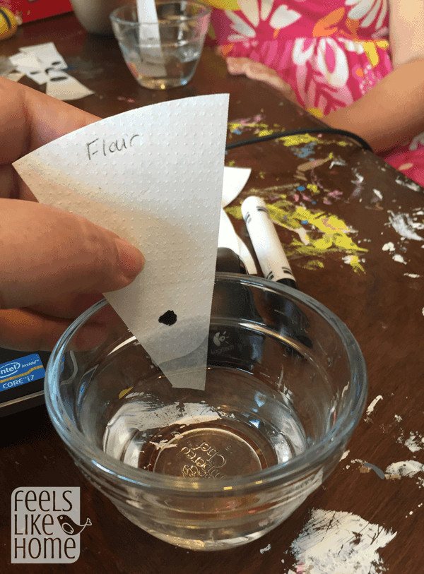 kids-science-experiment-chromatography-dip-in-water