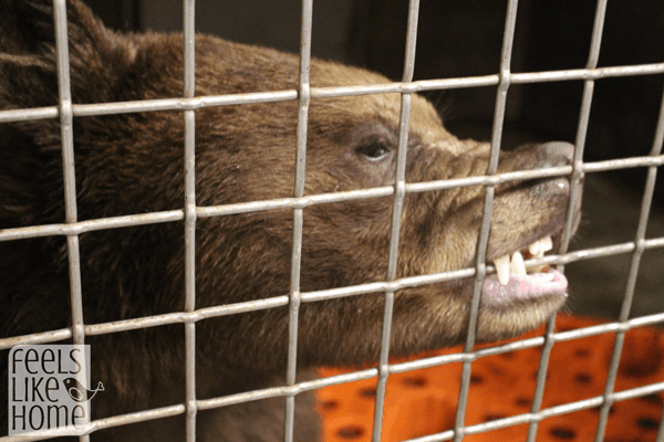 zooamerica-feeding-the-bears
