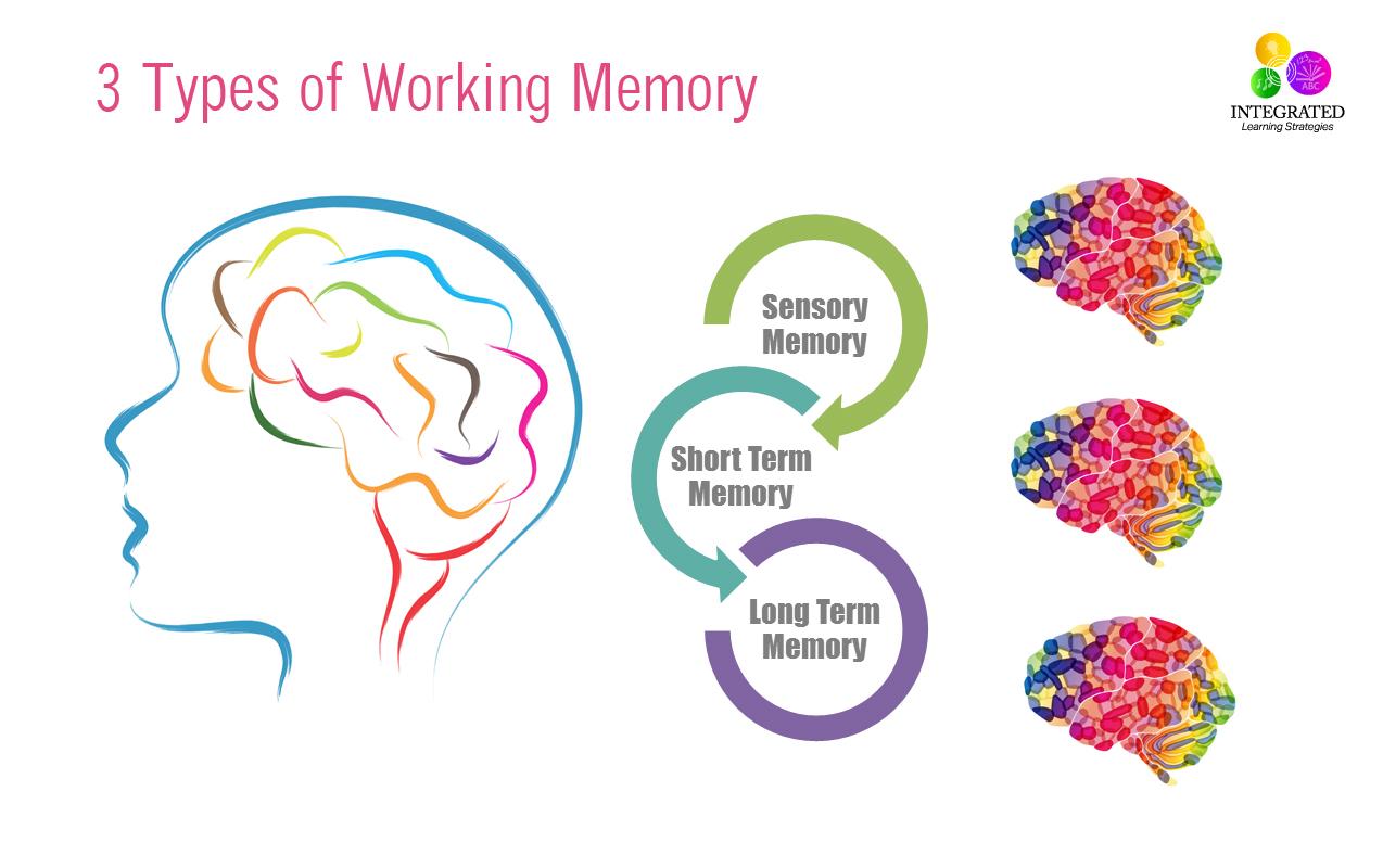 Memory Brain Worksheet