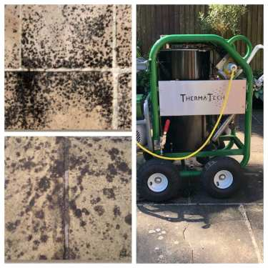 Our Super-heated Steam Cleaner Removes Black Spot Fungi Perfectly!