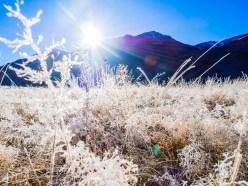 Icy Sunray