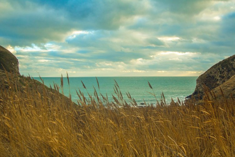 """Symbolbild: """"Zurück zum Land"""": Eine Bucht mit Sicht aufs Meer, Weizen im Vordergrund"""