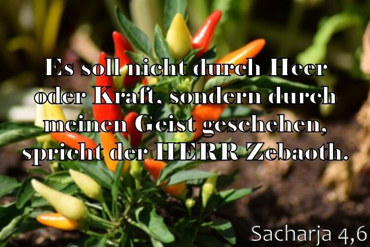 Wochenspruch 23 / 2017: Sacharja 4,6: Es soll nicht durch Heer oder Kraft, sondern durch meinen Geist geschehen, spricht der HERR Zebaoth.