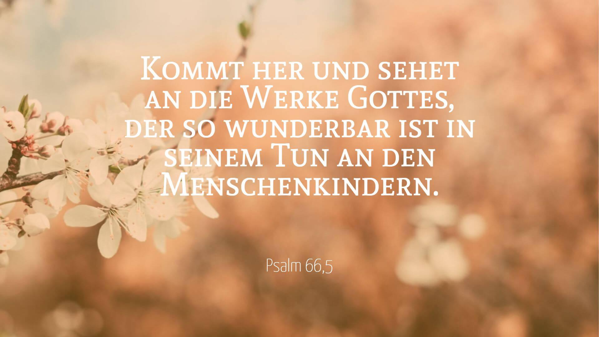 Kommt her und sehet an die Werke Gottes, der so wunderbar ist in seinem Tun an den Menschenkindern. - Psalm 66,5