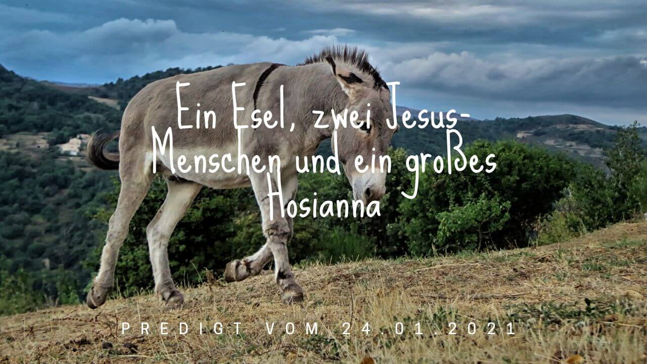 Ein Esel, zwei Jesus-Menschen und ein großes Hosianna. Predigt vom 24.01.2021