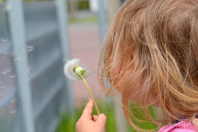 Pusteblumen Make a wish - Pusteblumen im Glas - Mottenwunsch für Euch