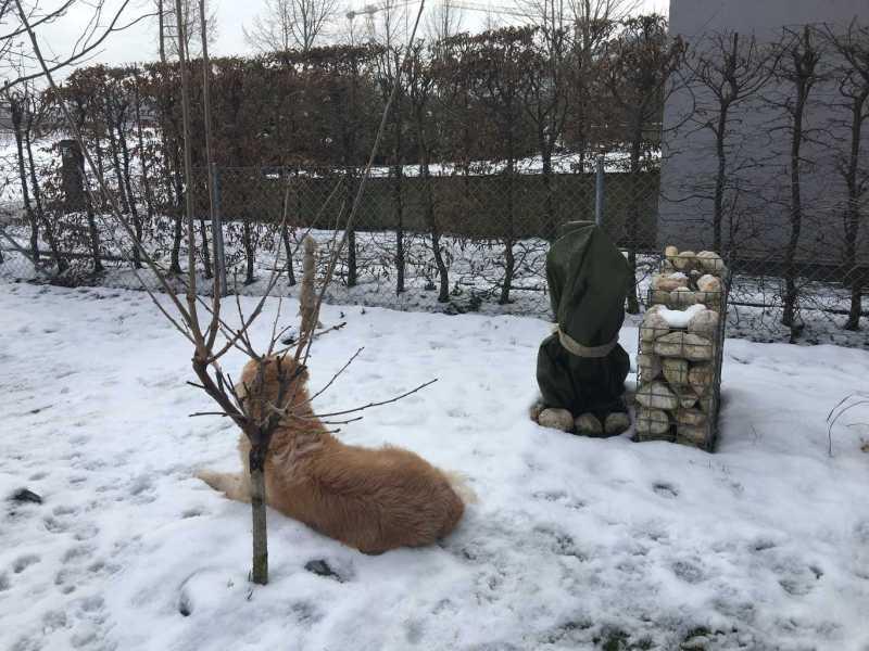 Winterstimmung Feigengarten Januar 2016