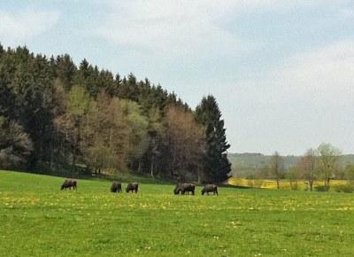 Albwestern: Die Büffel sind los –  Sendetermin am 21.10.