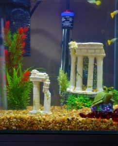 aquastyle aquarium