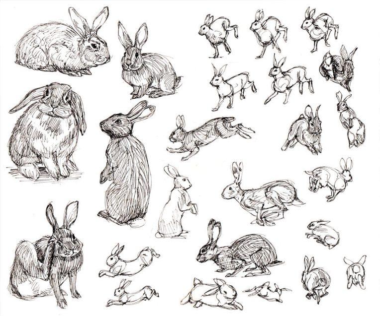 rabbits-Felicia_Cano