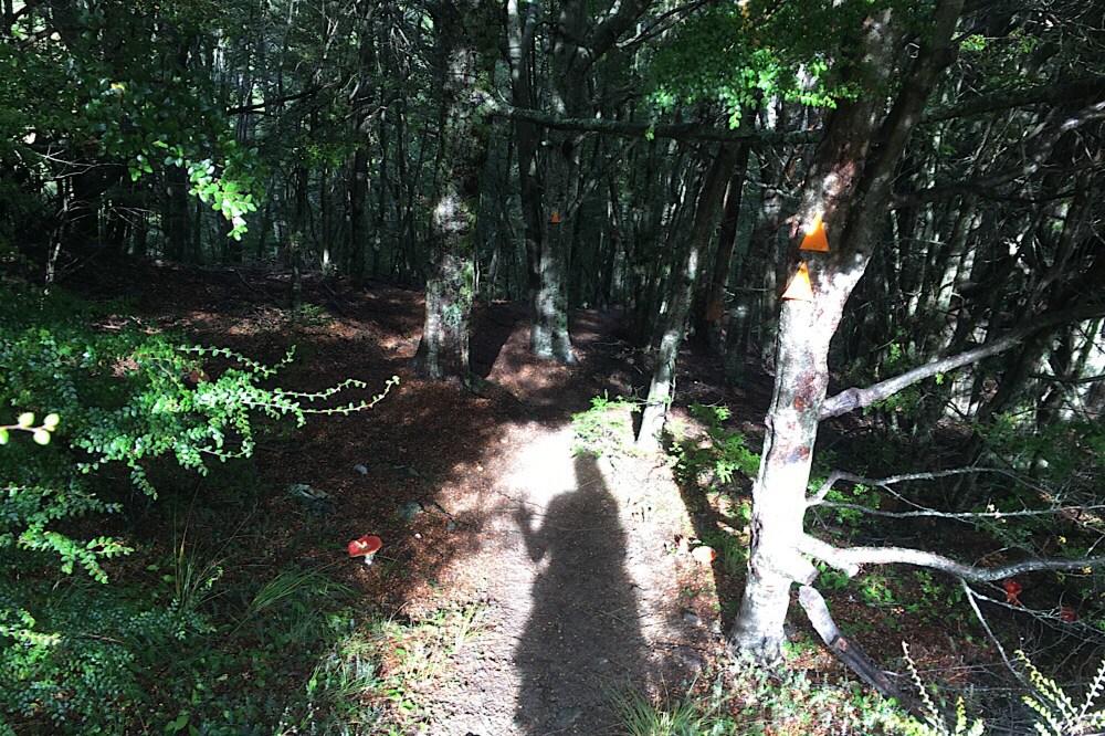 Motatapu track