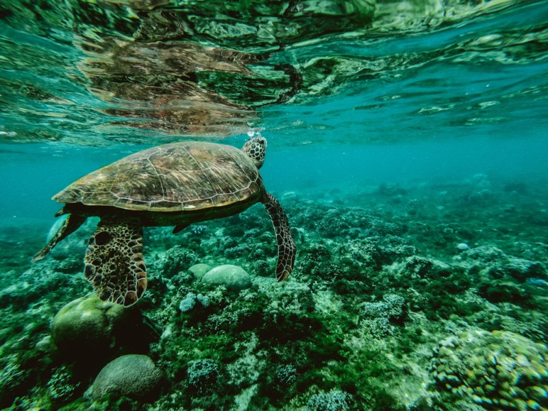 Chartered Catamaran Cruises and Boat Trips - Hol Chan and Shark Ray ALley - Turtle