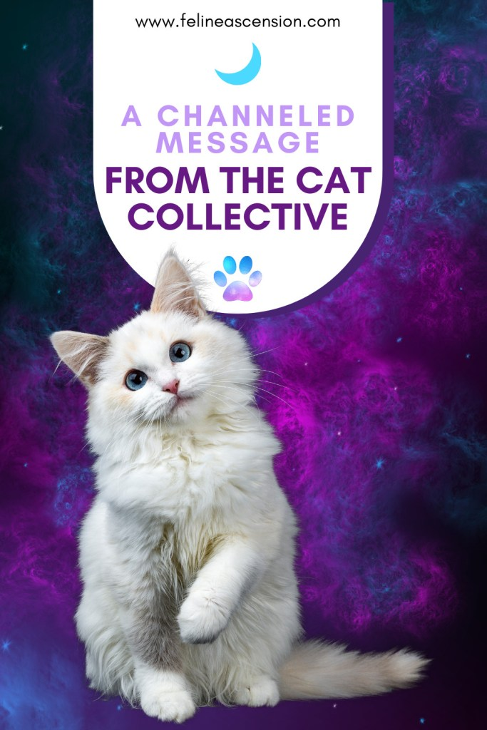 A Channeled Message from the Cat Collective