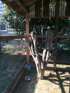 Sharkey needed an outdoor reatreat of her own, and loves hanging out in this sturdy catio. ($200)