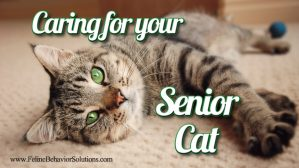 Caring for Your Senior Cat