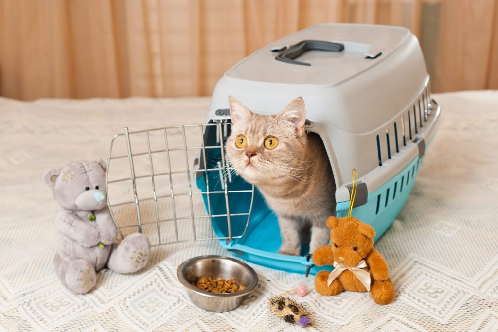 Pet Preparedness for Disasters
