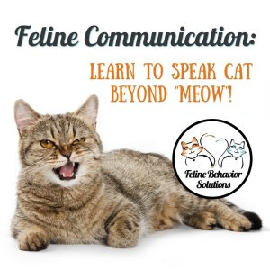 Feline Communication Webinar