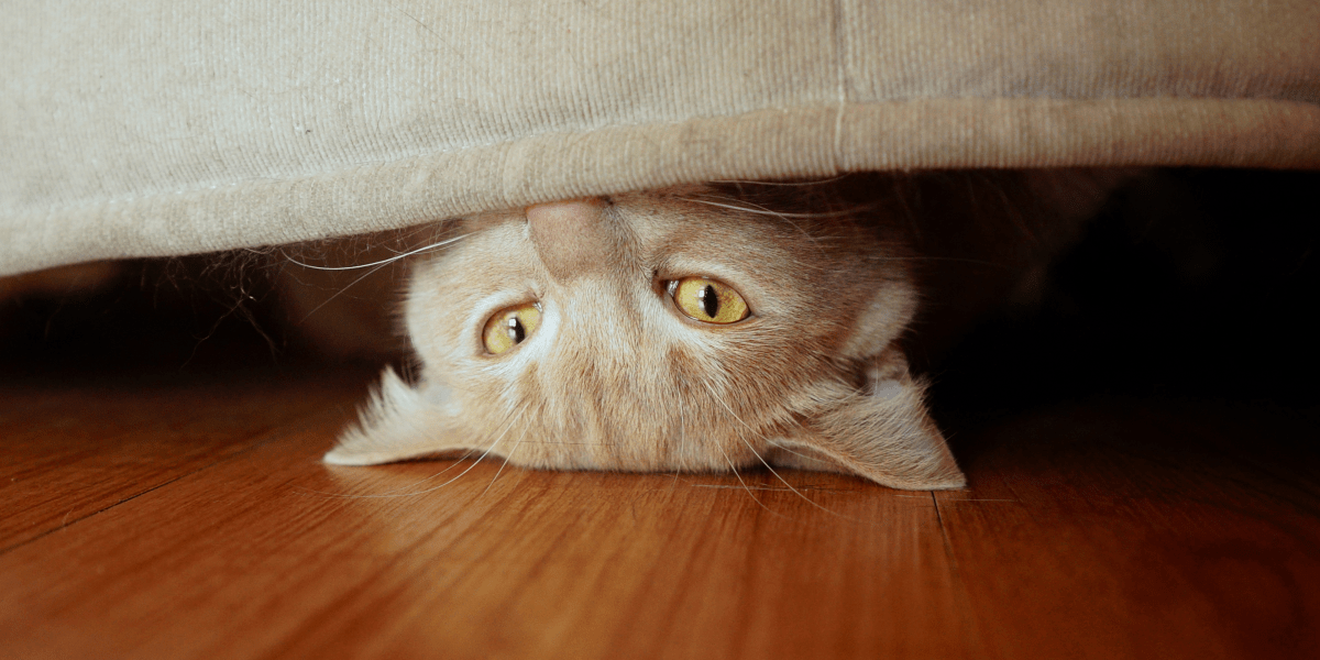 Hiding Behavior in Cats - Cropped