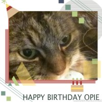 Happy Birthday Opie (7)!