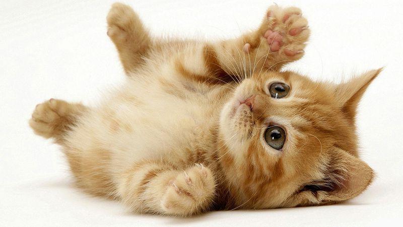 how to remove cat urine feline