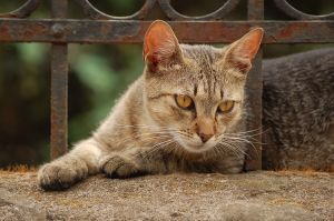 Natural Remedies for Cats – 20 Top Health Tips
