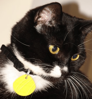 Does Compulsory Microchipping Law Apply to Cats?
