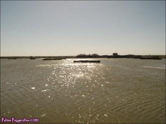 51 - Lagunas de Villafafila15