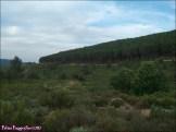 78 - Sierra de la Culebra1