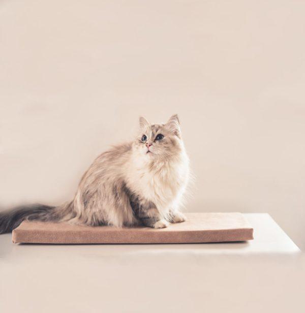 beżowe legowisko dla kota na parapet