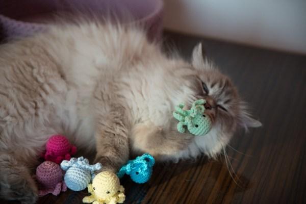 zabawka dla kota z kocimiętką ośmiorniczka