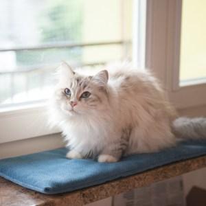 legowisko na parapet niebieskie dla kota