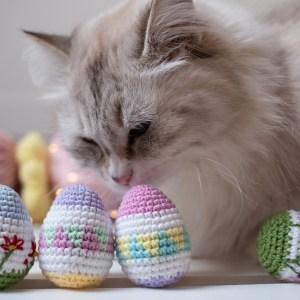 jajko dla kota pisanka z kocimiętką