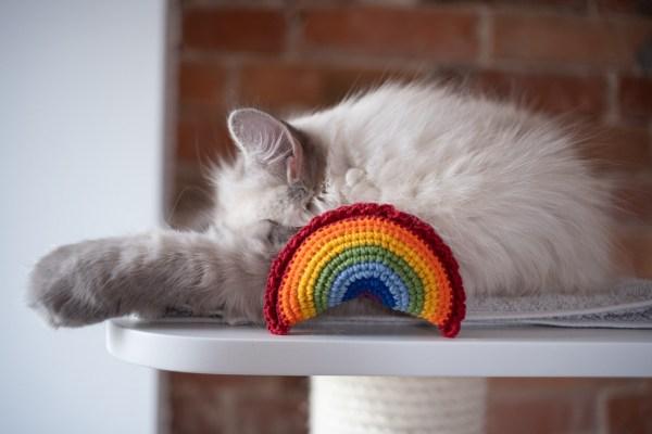zowy pieróg zabawka dla kota