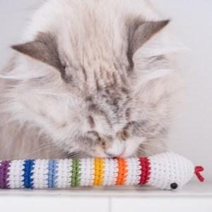 tęczowa zabawka dla kota