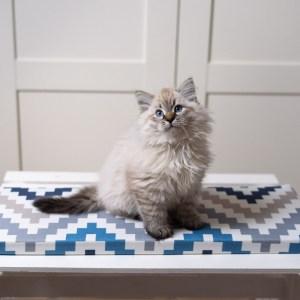 legowisko dla kota na parapet 22cm