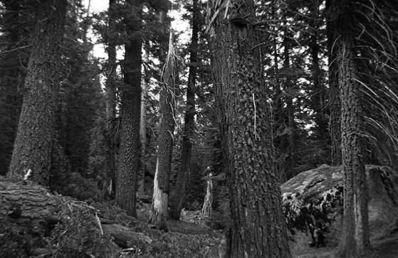 Yosemite 03