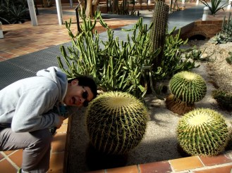 and more cactus