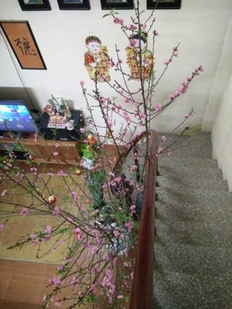 Gigantic cherry blossom