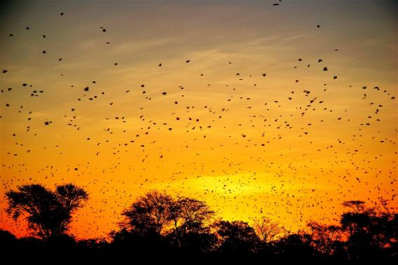 Bolivian-Adventures-Sunset-Roost-069