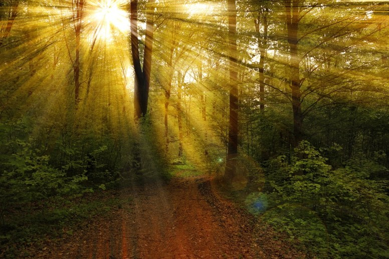 light-rays-forest