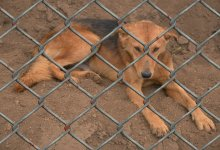 Photo of When Is Animal Cruelty a Felony?
