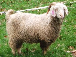 Let's Talk Wool
