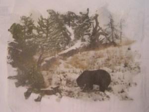 Bear Photo Finished