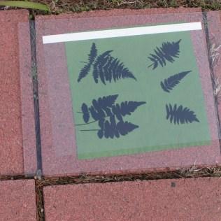 Ferns Getting Sun